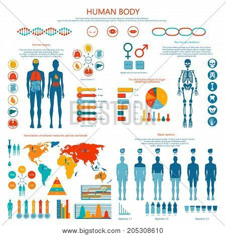 Human body infographic. Vector illustration of earthborn organs and skeleton, water balance, formulation of national medicines policies worldwide.