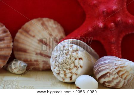 Starfish and seashells close-up on a red background