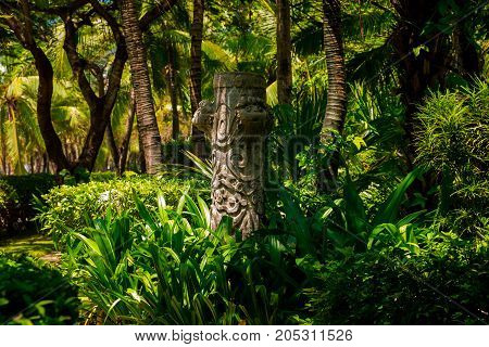 Trail in the tropical jungle in the afternoon. Tropic in the park. Stone road in forest. Palm