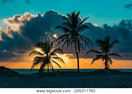 three palm trees near the ocean on an early cloudy summer morning