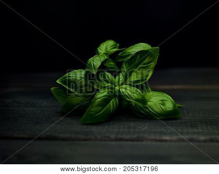 Fresh green basil plant black background close up selective focus.