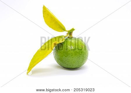 stock photo lime isolated on white background