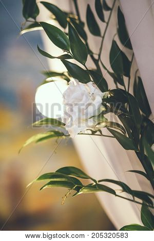 Wedding arch in studio with flowers and colourful background