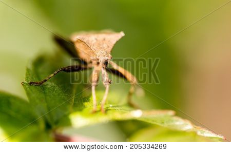 bug bug on a green leaf in nature .