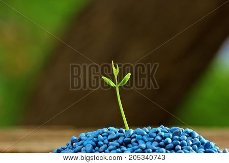small plant growing , Born concept ,