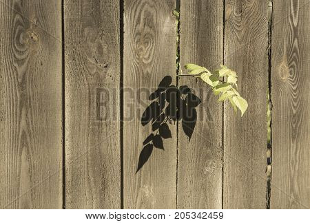 Tree branch fell in crack between slats of fence
