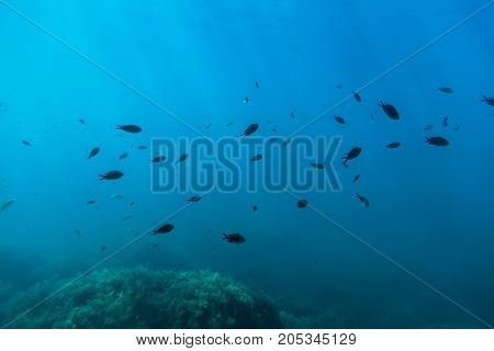 Black fish and sun rays in underwater. Wild life in sea