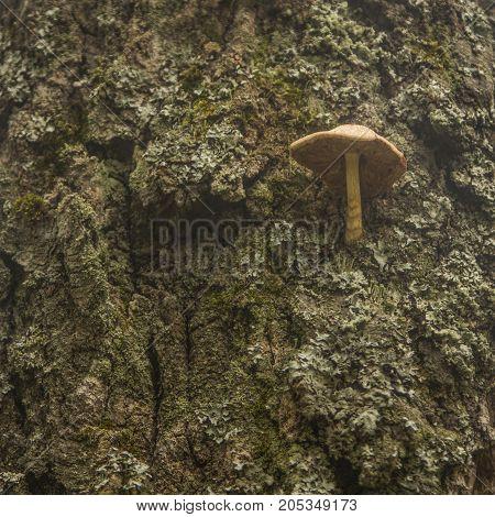 Mushroom growing on the side of old tree