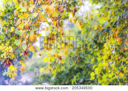 Branches Of Colorful Autumn Leaves Cascading With Layers Of Focus, Soft Light, Glow