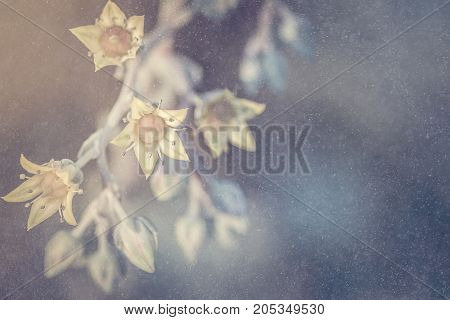 Abstract background of Desert Rose flower with snowy overlay