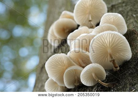 Family of mushrooms on a tree trunk .