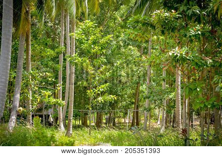 tropical forest landscape with palmtrees during daytime