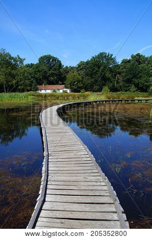 Peaceful mindful path on a wooden boardwalk