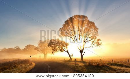 landscape trees lights outside near street  with sunlight
