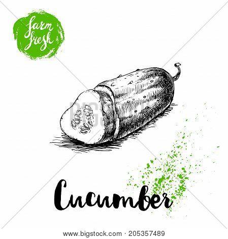 hand drawn sketch style sliced half of cucumber. Vector fresh farm vegetables poster. Retro illustration.