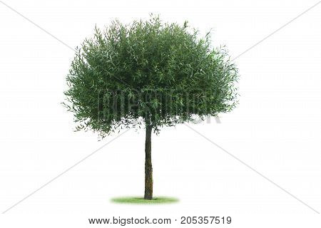 the green tree isolated on white background