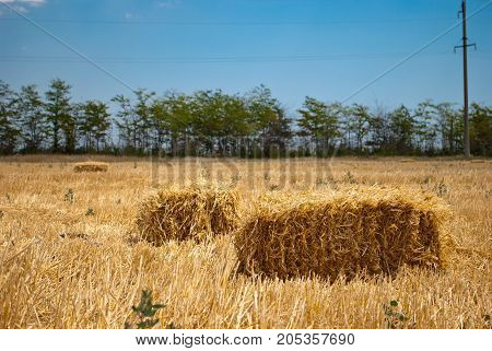 Rectangular yellow haystacks from hay dry straw mown grass lying on a field in a bright summer sunny day, against a blue sky with clouds and green trees