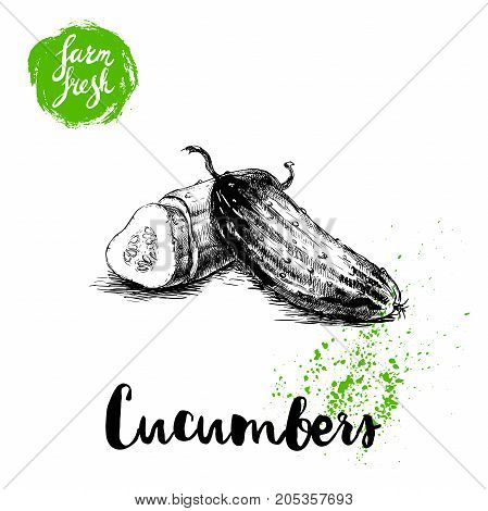 hand drawn sketch style whole cucumber and half of cucumber with slice. Vector fresh farm vegetables poster. Retro illustration.