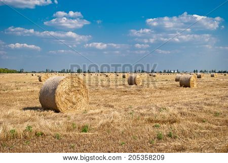 Round yellow stacks of hay dry straw, mown grass lie on the field in a bright summer sunny day, against a background of blue sky with clouds and green trees