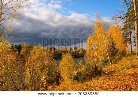 The shore is covered with wood and strewn with fallen yellow birch leaves. View of the river and the opposite shore. Low dark clouds in the blue sky