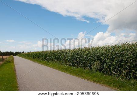 Salvigvej Road Along A Corn Field On Island Of Oroe In Denmark