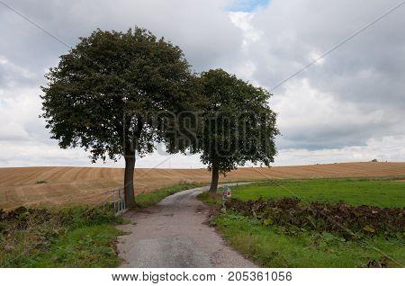 Trees Near An Old Road In Naestved Denmark