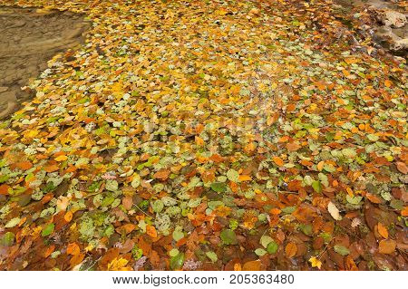 backdrop, nature, autumn concept. ravishing background of carpet composed of dead leaves of all colores that can be imagined, they are lied in the pool and glittering