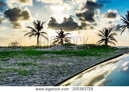 3 palm trees in a field by the beach with the sky reflecting off a windshield
