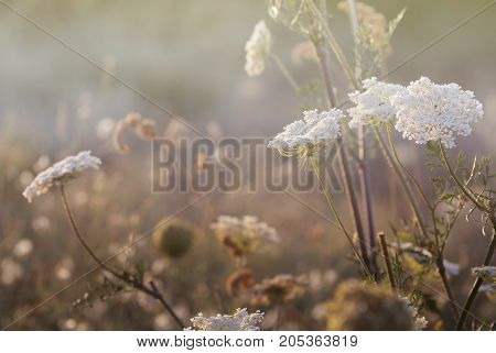 Wild meadow grass under morning sunlight. Summer field background. Sunny seasonal backdrop for your design