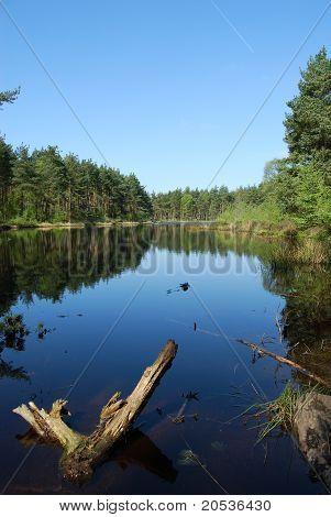 Devilla Forest