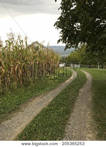 Cart-road In The Village. Passes By Corn Field. Away Visible Farmhouses And Mountains.