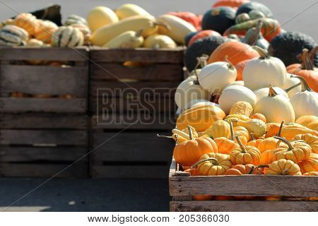 Varieties of winter squash and pumpkins on display on wood crates at outdoor market.