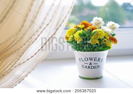 Autumn chrysanthemum flowers bouquet in a ceramic pot on white window sill