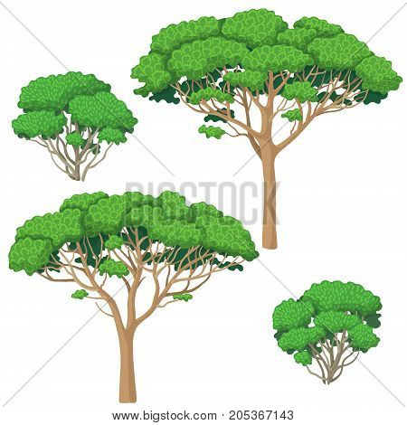 Trees and bushes set isolated on white background. Shrubs and stone pine vector flat illustration.