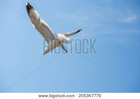 Single Seagull Flying In A Cloudy Sky
