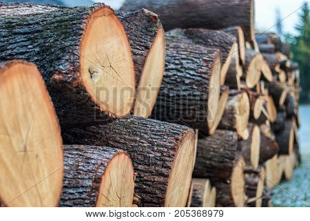 Close up of stack of big round cutted firewood pieces