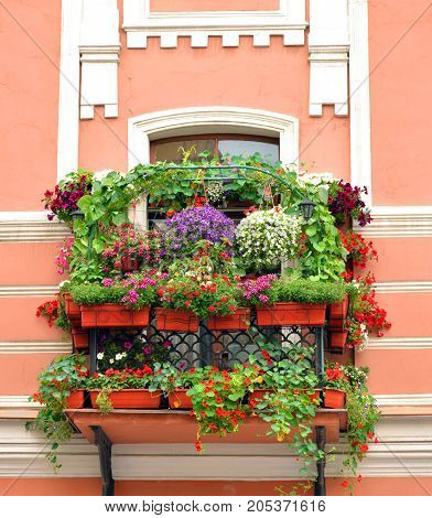 Old balcony overgrown with flowers in the center of St.Petersburg Russia.