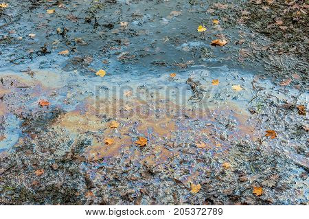 Close-up of oil spill reflecting colors in muddy swamp with fallen leaves.