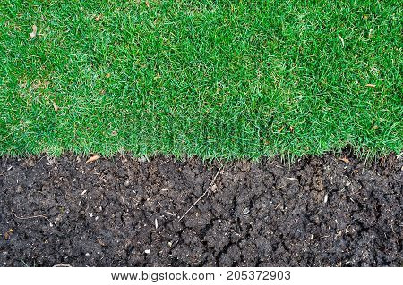Edge of dense grass turf ending at dark fertile dirt.