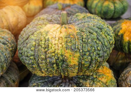 Autumn Pumpkins for Thanksgiving Background Stack of green over market shelf in market store. A Pumpkin is cultivar of a squash plant most commonly of Cucurbita pepo and is Halloween symbol