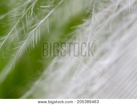 feather on a green background . In the park in nature