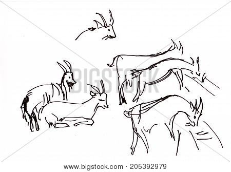 Instant sketch herd of the goats feeding