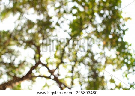 Blury bokeh green leaf on white sky. Green background.