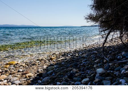 Rocky shore with shallow sea water canopy of pine tree making low shadow.