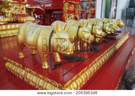 The golden pigs dolls in chinese temple.