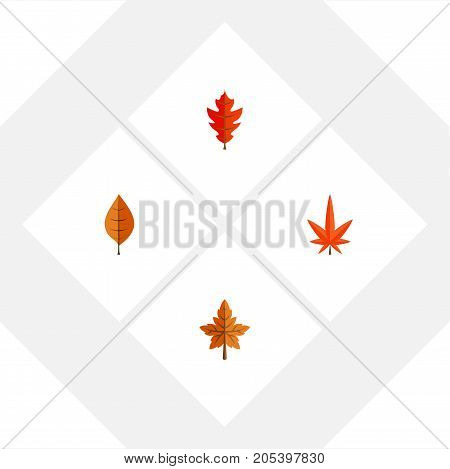 Flat Icon Maple Set Of Aspen, Frond, Foliage And Other Vector Objects