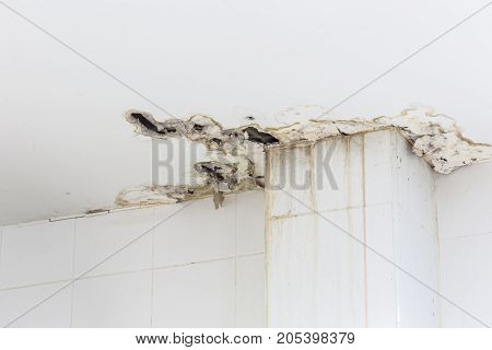 Ceiling Inside The Building Get Damaged Showing Moisture And Dirty Mold By Water Leaking And