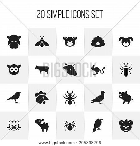 Set Of 20 Editable Zoo Icons. Includes Symbols Such As Arachnid, Jerboa, Beast And More