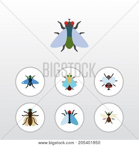 Flat Icon Housefly Set Of Buzz, Tiny, Mosquito And Other Vector Objects