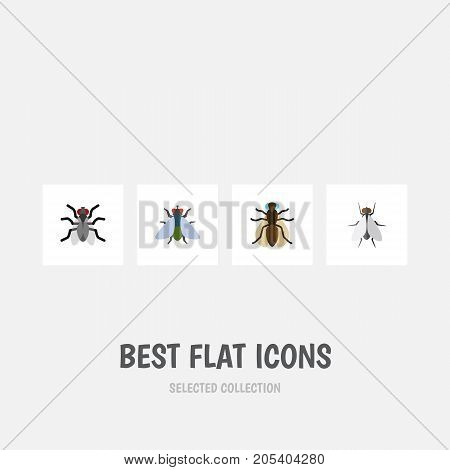 Flat Icon Fly Set Of Hum, Fly, Mosquito And Other Vector Objects